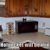 basement-cat-wants-your-hotpocket