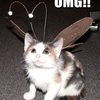 cat-has-antennae