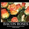 demotivational-bacon-roses