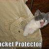 kitten-is-your-pocket-protector