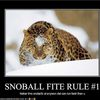 rule-number-one-for-throwing-snowballs