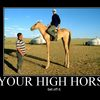 your-high-horse